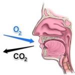 Animals need oxygen