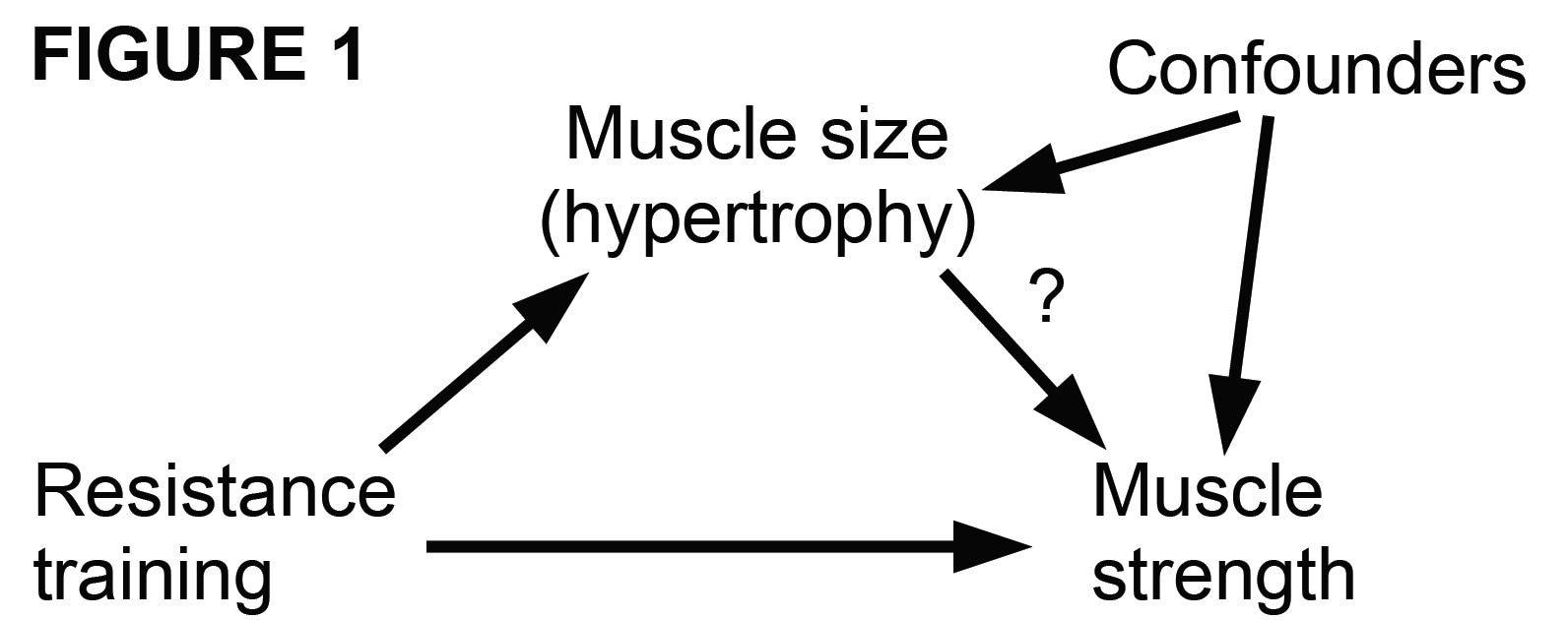 The debate on muscle hypertrophy - Motor Impairment